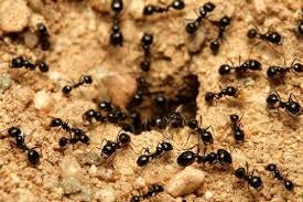 images (56)النمل