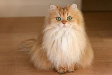 بالفيديو.. قطة تقتحم عرض أزياء وتسرق الأضواء من العارضات
