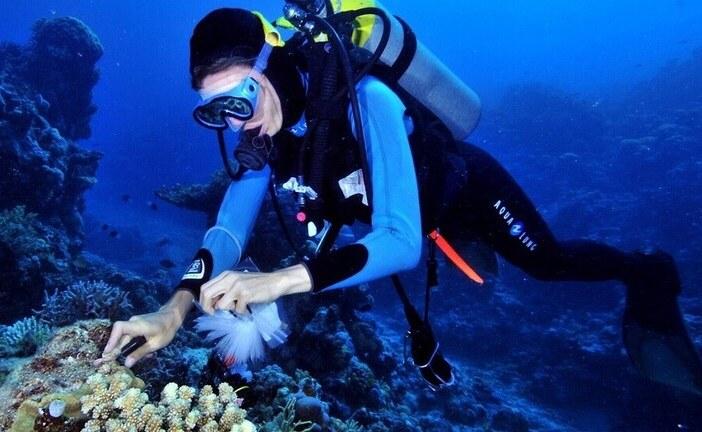 علاج جديد لمرض السل من قاع البحار